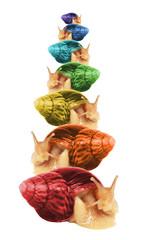Rainbow achatina snails. Isolated image