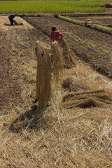 People planting garlic farm