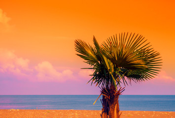Palm tree on the beach at sunset