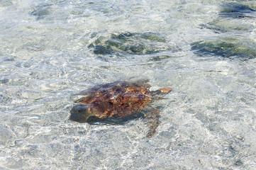 Turtle in seashore