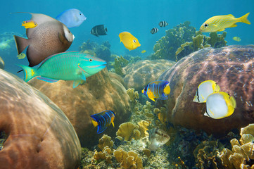 Colorful tropical fish in a coral reef