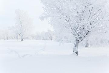 Winter landscape. Cold winter morning