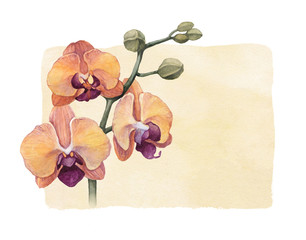 Background with watercolor orchid flowers
