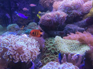 mini sea in fish tank