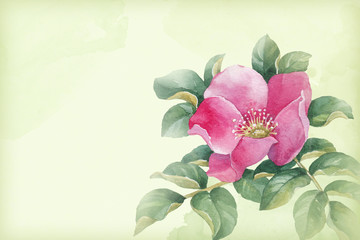Watercolor dog rose illustration