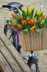 Bicycle with a basket full of fresh spring tulips