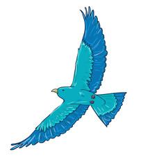 Wall Mural - blue bird vector. flight of a bird, flapping wing.