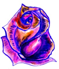 Colorful Painted Rose