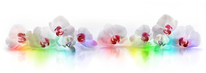 Orchideen mit Regenbogenfarben