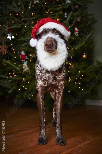 7cda788b1f62c dog wearing Santa hat and beard