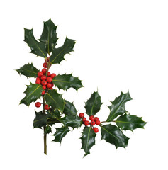 Christmas Holly Border Isolated on White Background