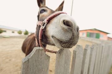 Donkey's Muzzle