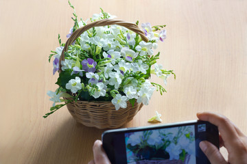 smart phone take a photo flower