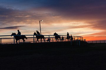 Race Horses Riders Silhouetted Sunrise