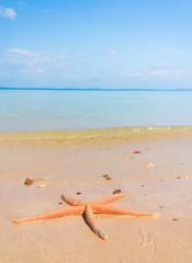 On a Beach Fallen Star