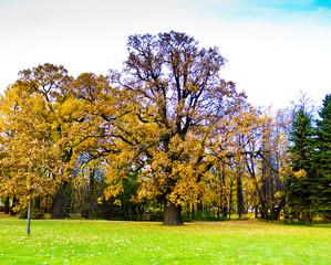 Path Wood Foliage