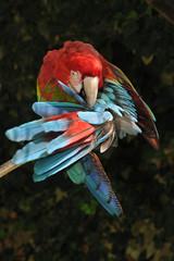 Papageie