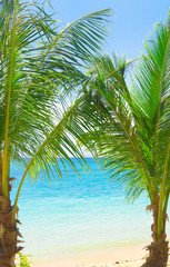 Under Trees Palms Overhanging