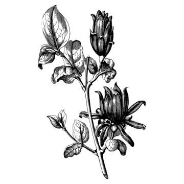 Vintage botany