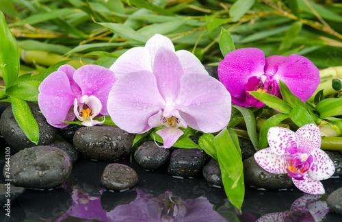 wellness orchideen steine bambus und wasser stockfotos und lizenzfreie bilder auf. Black Bedroom Furniture Sets. Home Design Ideas
