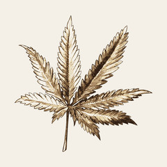 Sketch illustration of marijuana (cannabis) or hemp leaf