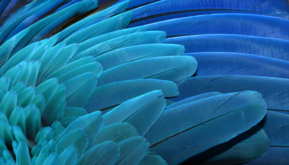 Close up of Macaw wing feathers, Caribbean