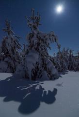 Fototapete - Beautiful night winter landscape with the stars