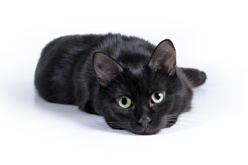 Black cat lying on a white background, looking at camera