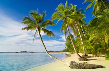 Coconut Coast Palm Panorama