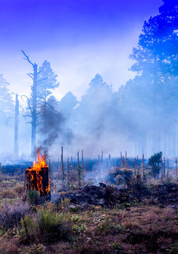 Wild Fire in Arizona