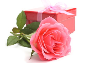 Pink rose and red gift box over white