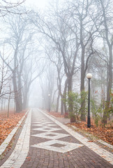 foggy morning in city park