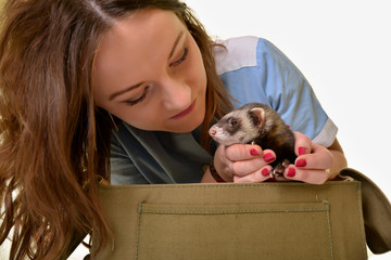 ferret an veterinarian
