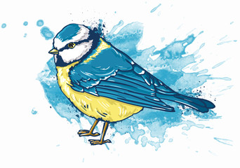 Fotoväggar - watercolor illustration Titmouse white background.