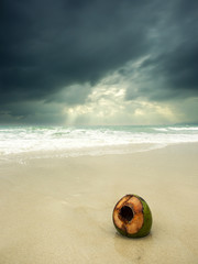 Coconut on the beach on a stormy day