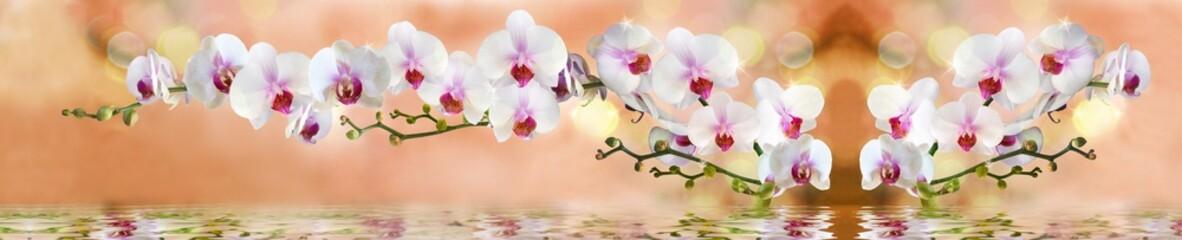 Papiers peints Orchidée орхидеи в воде на светло бежевом фоне
