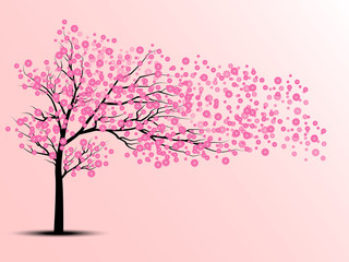 the silhouette of cherry trees