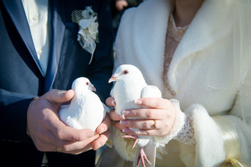 two white pigeons in the hands of the bride and groom,
