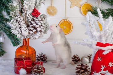 decorative rat on a background of Christmas decorations