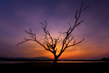 Lone Dead Tree in Sunset