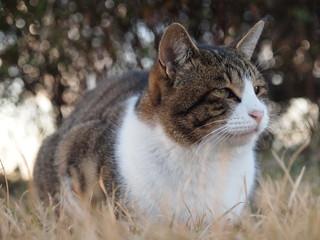 草地に座る猫