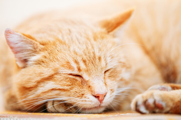 Peaceful Orange Red Tabby Cat Male Kitten Sleeping In His Bed On