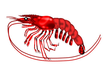 red tiger shrimps white background