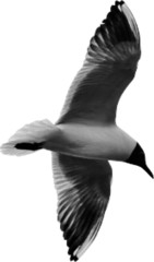 black gull from dots isolated on white