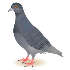 Dove gray