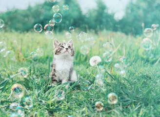 Kitten staring at soap bubbles