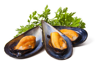 Spoed Fotobehang Schaaldieren mussels isolated on white background