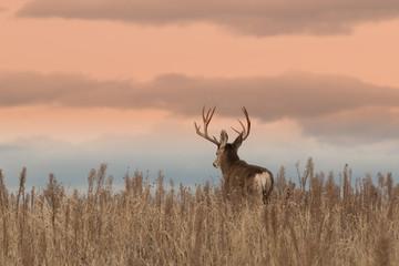 Mule Deer Buck Wall mural