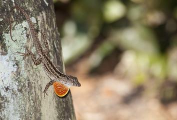 Upset Lizard