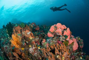 Diver, coral reef, sponge, sea fan in Ambon, Maluku underwater